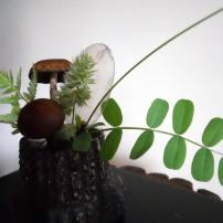 foragedflora