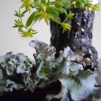 foragedfloralichen
