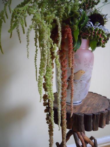 Hanging Amaranthus1