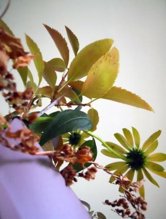 Echinaceaandforsythiadetail