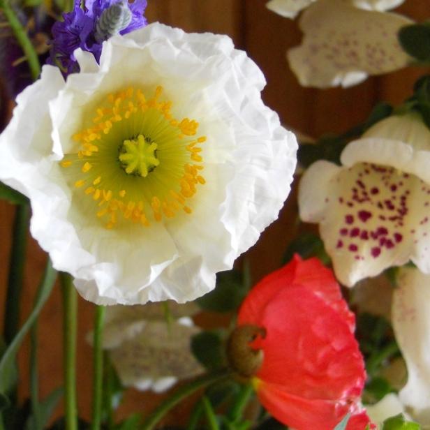 poppywhite