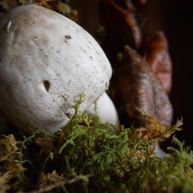 mushroomdetail