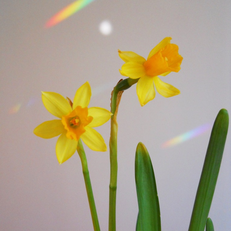 prismatic display with narcissus