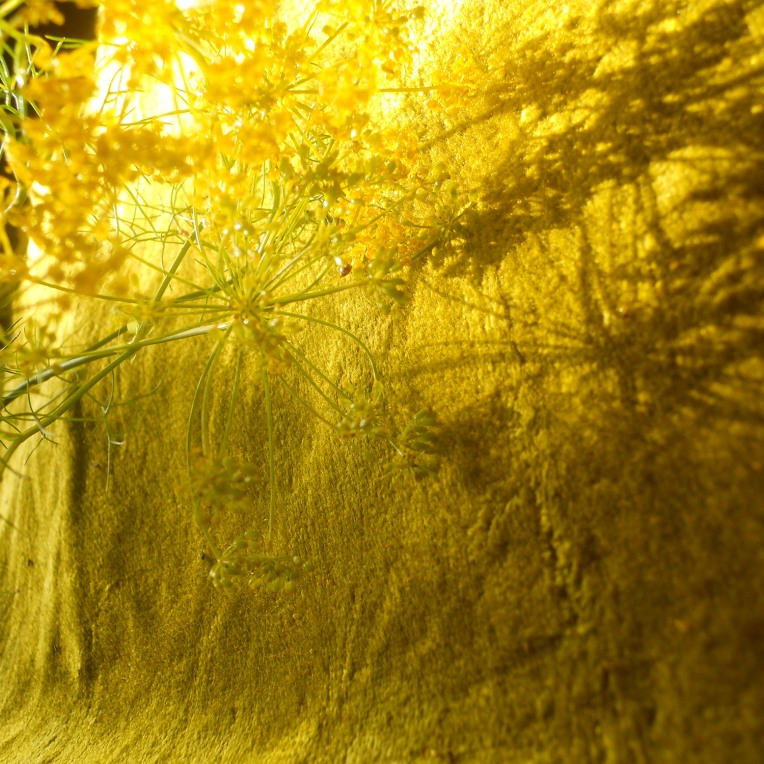 fennel seed shadow