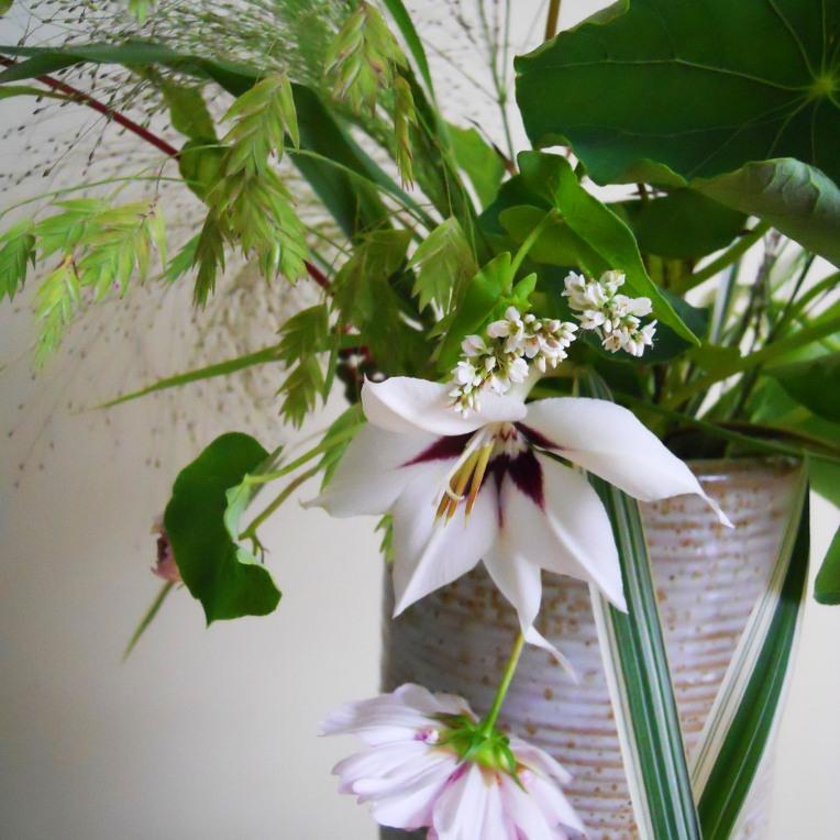 heirloom gladiolus