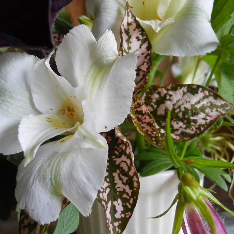 Alstromeria white