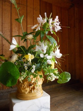 cleome and seashell cosmos